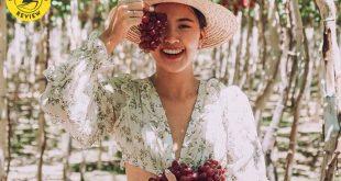Thuyết minh về cây Nho Ninh Thuận