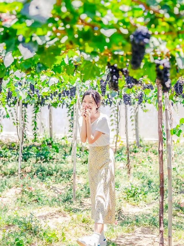 Vườn Nho Ba Moi Ninh Thuận